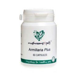 Armillaria Plus (450mg) 60db