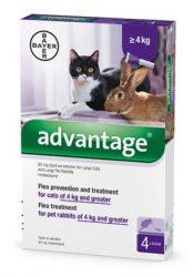 Advantage 80 Spot-on ampulla -  macska/nyúl 4-8kg 4db ampulla